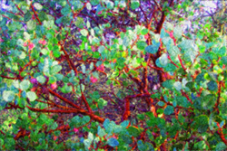 It seemed to be a tree. Rocky Rawstern Artist