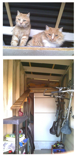 inside Rock and Janel's shed - the cat loft